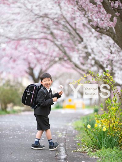 【今後の撮影につきまして】&桜のロケーション撮影_c0312522_15021829.jpg