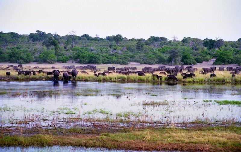 アフリカの記憶 013_d0010432_13501479.jpg