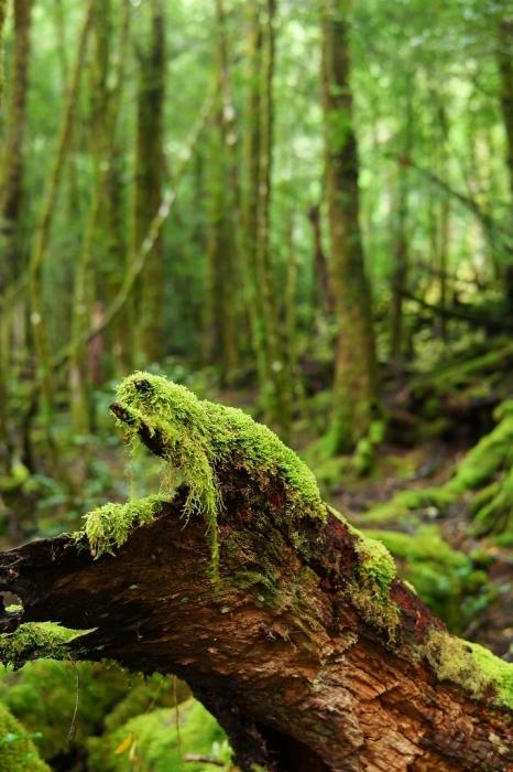 森の中で_f0050534_08510921.jpg