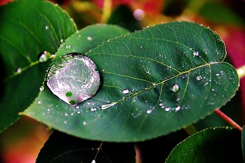 緑雨_b0314043_08570252.jpg