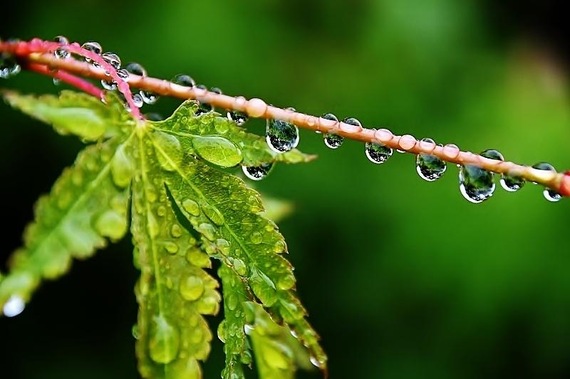 緑雨_b0314043_08573077.jpg
