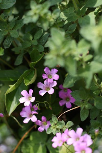 バラ満開の時期が過ぎても庭は元気いっぱい_e0333647_15495267.jpg