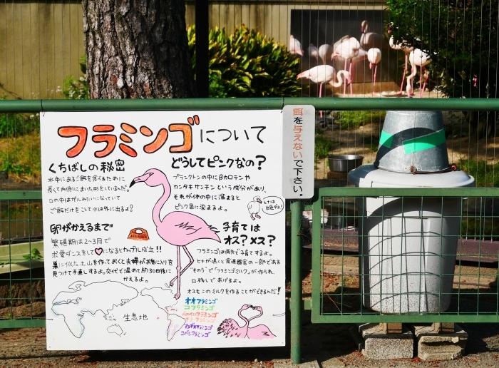 お城の動物園も再開  2020-05-26 00:00     _b0093754_22281601.jpg