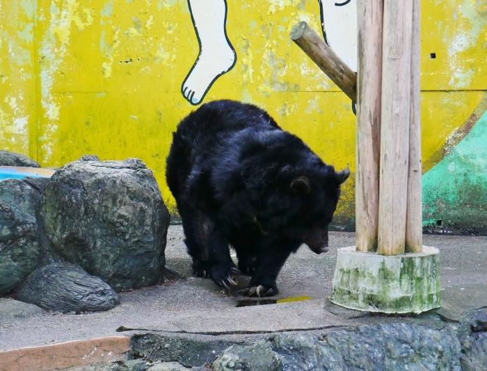 お城の動物園も再開  2020-05-26 00:00     _b0093754_22285240.jpg