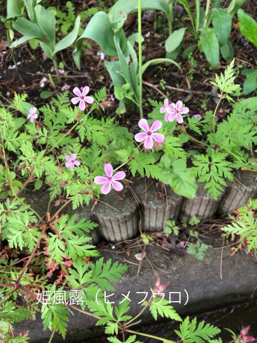 こんにちは、初めてのお花たち_b0093660_23021583.jpg