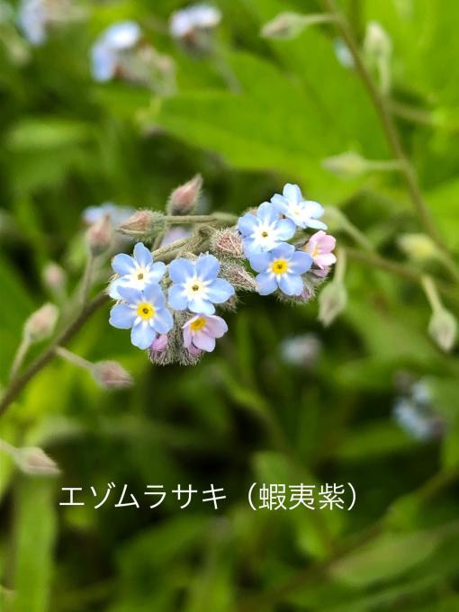 こんにちは、初めてのお花たち_b0093660_23021888.jpg