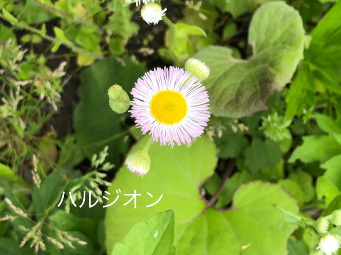 こんにちは、初めてのお花たち_b0093660_23022109.jpg