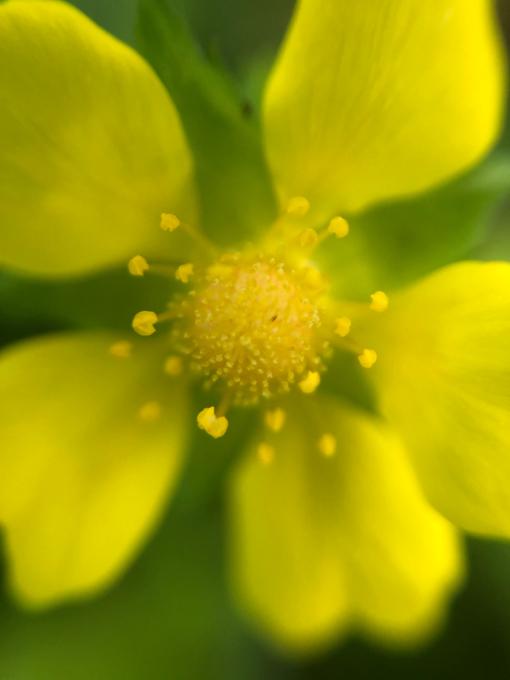 こんにちは、初めてのお花たち_b0093660_23153275.jpg