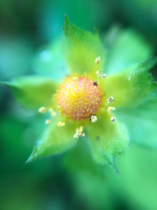 こんにちは、初めてのお花たち_b0093660_23153598.jpg