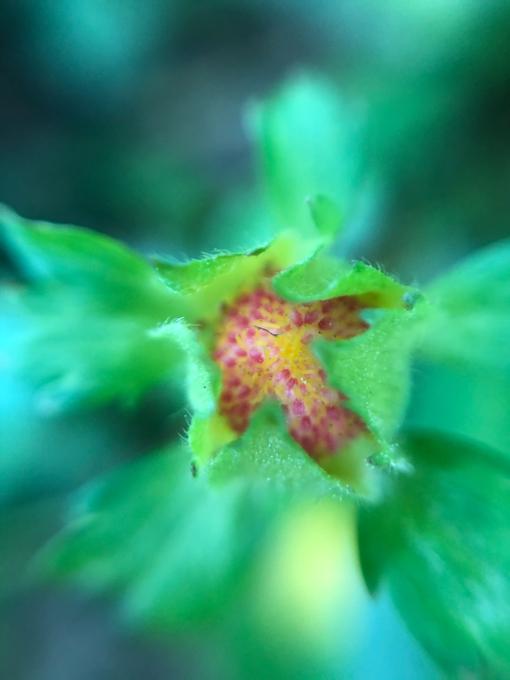 こんにちは、初めてのお花たち_b0093660_23153756.jpg