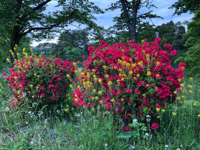 こんにちは、初めてのお花たち_b0093660_23205511.jpg