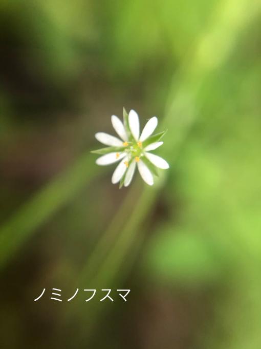 こんにちは、初めてのお花たち_b0093660_23230039.jpg
