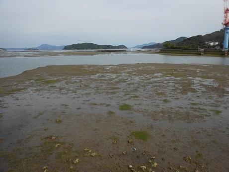 三津口湾の大干潟、向こうに見えるのは…_e0175370_20501692.jpg