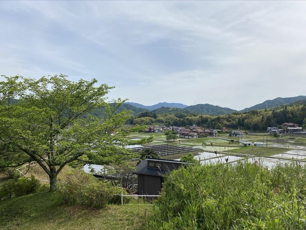 裏山の柿と庭のヤマボウシ_c0334574_19165613.jpeg