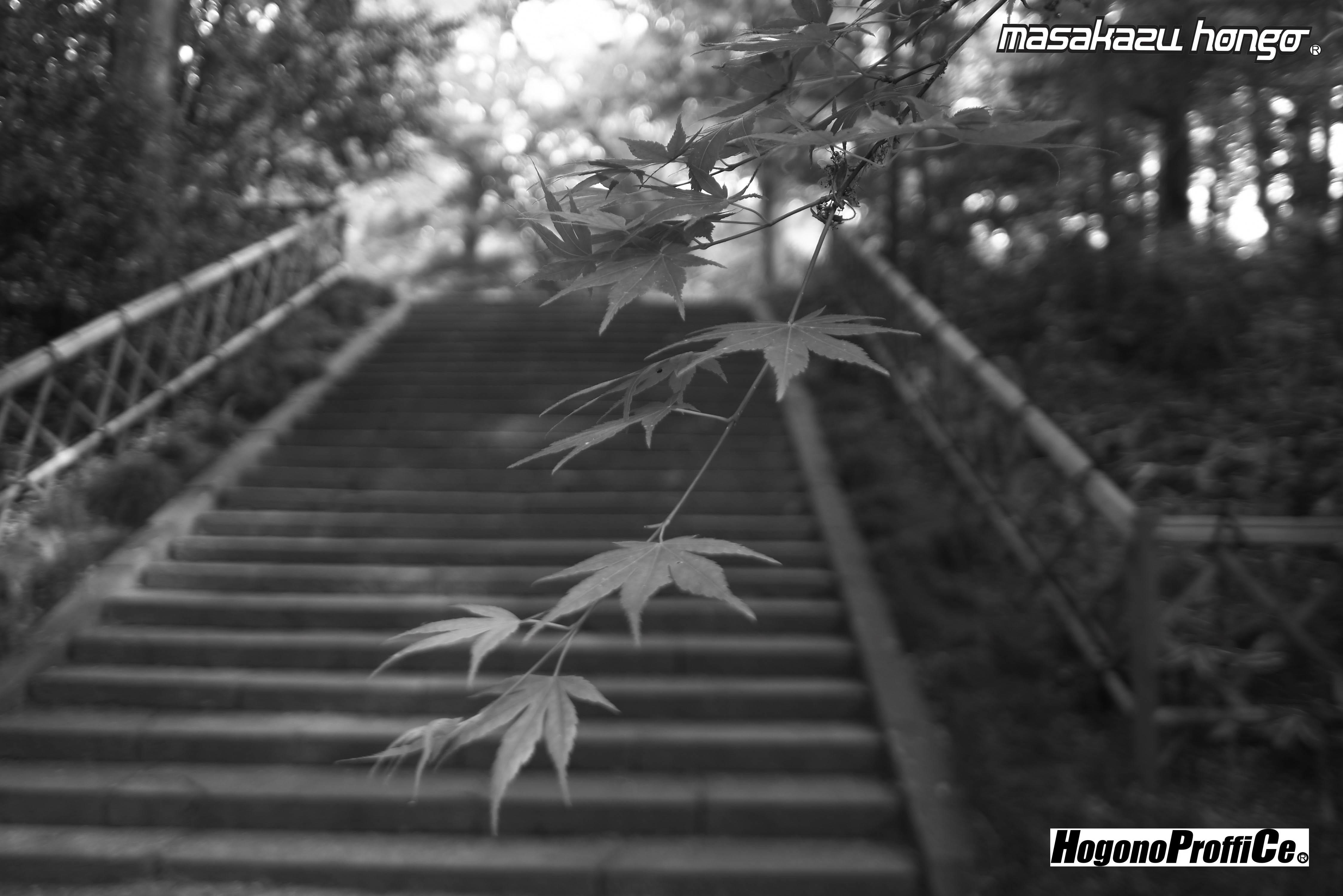 【おっ散歩カメラ放浪記:第6回】青葉神社とカラスコ_b0008475_08145438.jpg