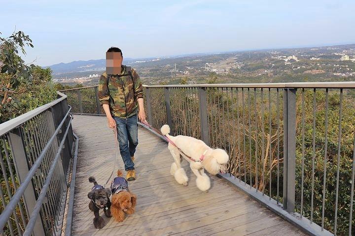 横山展望台の絶景を再び。【誕生日旅行5】_b0111376_15244490.jpg