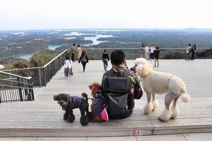 横山展望台の絶景を再び。【誕生日旅行5】_b0111376_15303255.jpg