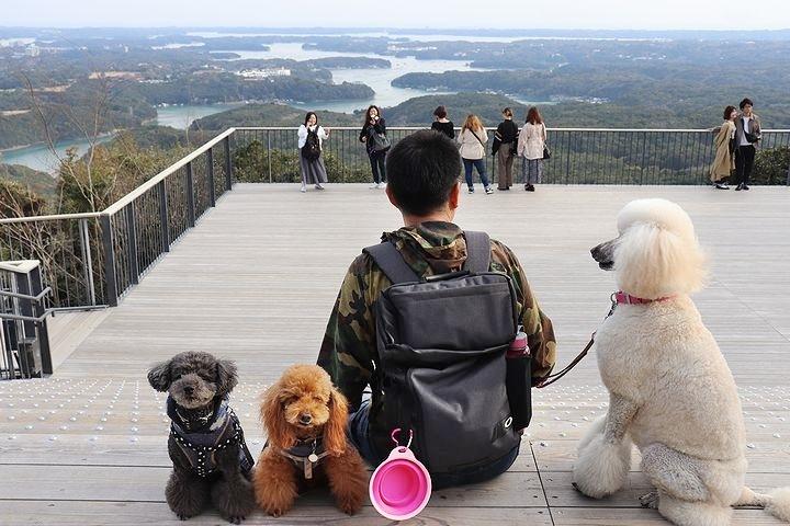 横山展望台の絶景を再び。【誕生日旅行5】_b0111376_15332582.jpg
