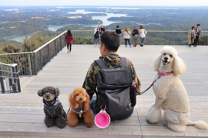 横山展望台の絶景を再び。【誕生日旅行5】_b0111376_15451696.jpg