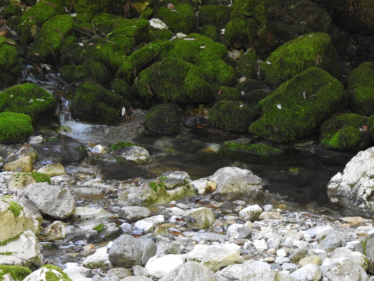 『渓流風景(神崎川と円原川)』_d0054276_20201333.jpg