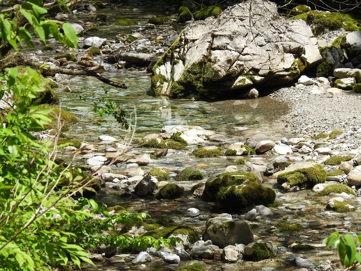 『渓流風景(神崎川と円原川)』_d0054276_20204315.jpg