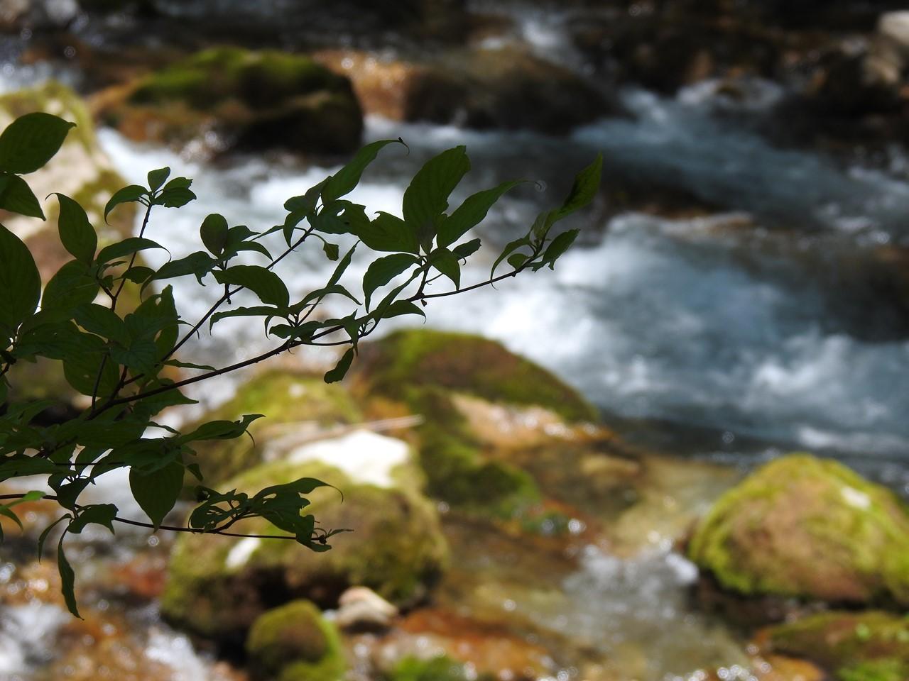 『渓流風景(神崎川と円原川)』_d0054276_202326.jpg