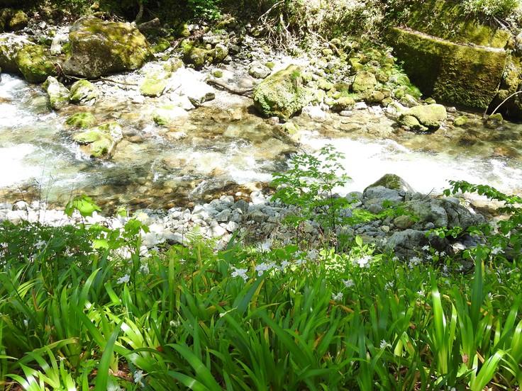 『渓流風景(神崎川と円原川)』_d0054276_20233120.jpg