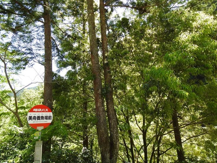 『渓流風景(神崎川と円原川)』_d0054276_20244698.jpg