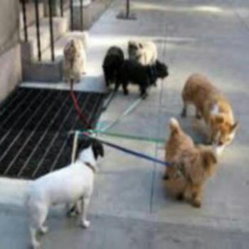 《 犬も 歩けば! 》_c0328479_12171939.jpg