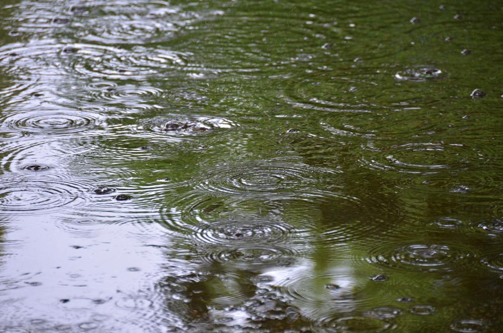 雨降りの公園、独り占め?_f0159784_11334396.jpg