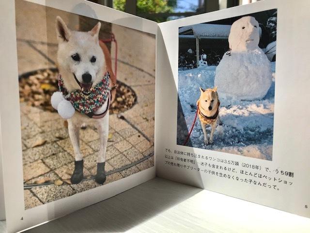 元繁殖犬「はなちゃん」のフォトブック_f0242002_21174821.jpg