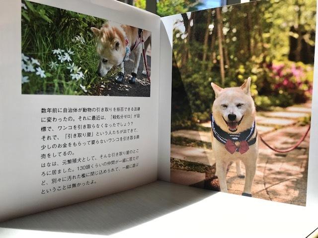 元繁殖犬「はなちゃん」のフォトブック_f0242002_21175523.jpg