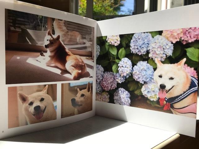 元繁殖犬「はなちゃん」のフォトブック_f0242002_21180216.jpg