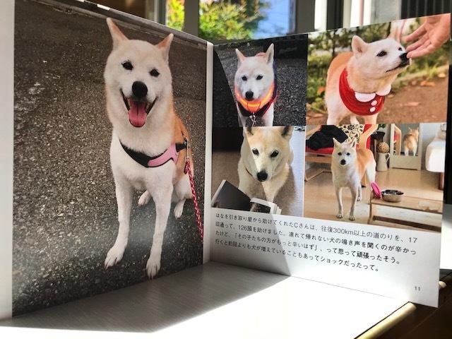 元繁殖犬「はなちゃん」のフォトブック_f0242002_21180857.jpg