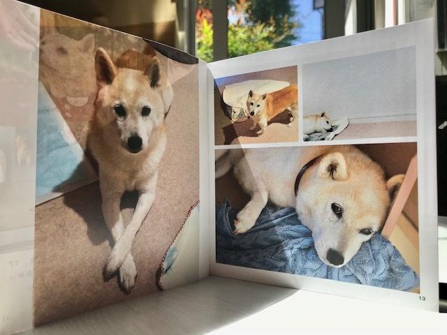 元繁殖犬「はなちゃん」のフォトブック_f0242002_21181543.jpg