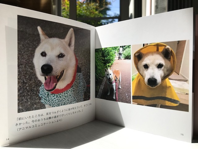 元繁殖犬「はなちゃん」のフォトブック_f0242002_21311143.jpg