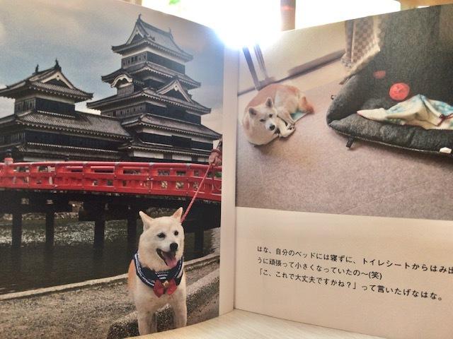 元繁殖犬「はなちゃん」のフォトブック_f0242002_21311804.jpg