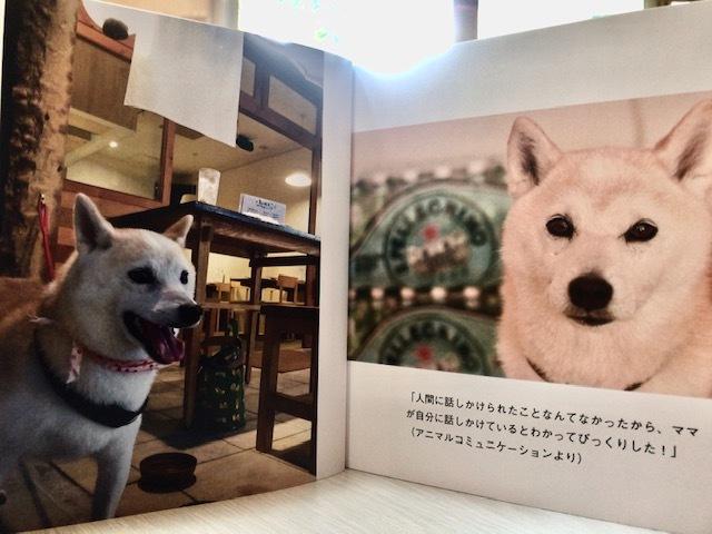 元繁殖犬「はなちゃん」のフォトブック_f0242002_21312493.jpg