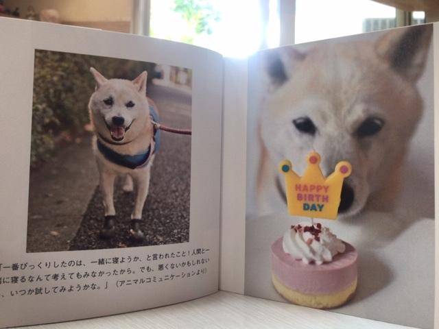 元繁殖犬「はなちゃん」のフォトブック_f0242002_21313036.jpg
