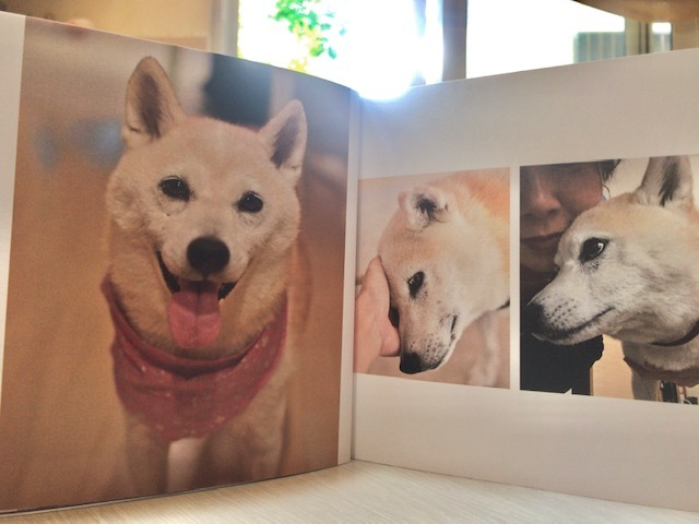 元繁殖犬「はなちゃん」のフォトブック_f0242002_21313787.jpg