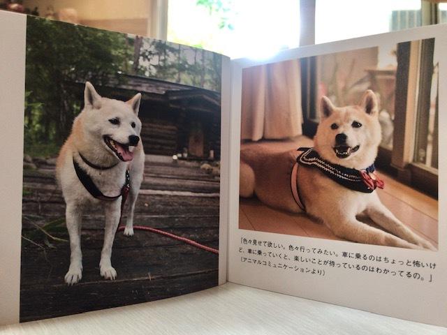 元繁殖犬「はなちゃん」のフォトブック_f0242002_21441420.jpg