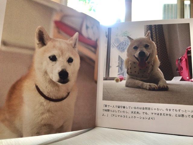 元繁殖犬「はなちゃん」のフォトブック_f0242002_21442259.jpg