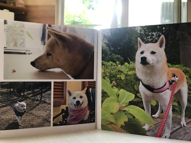 元繁殖犬「はなちゃん」のフォトブック_f0242002_21442947.jpg