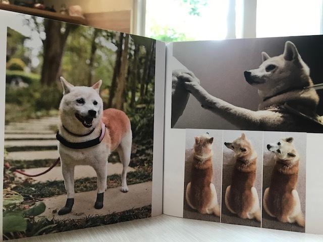 元繁殖犬「はなちゃん」のフォトブック_f0242002_21444743.jpg