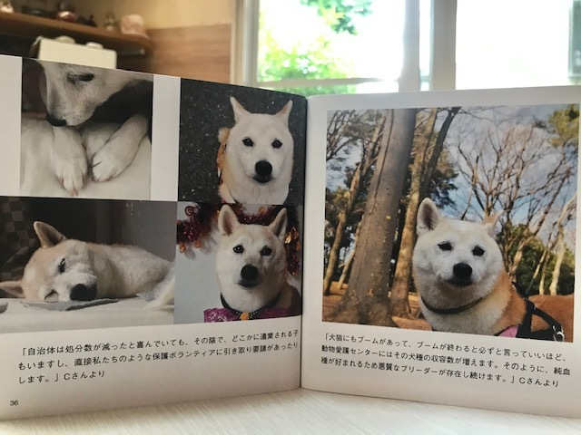 元繁殖犬「はなちゃん」のフォトブック_f0242002_21445667.jpg