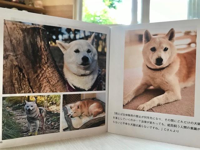 元繁殖犬「はなちゃん」のフォトブック_f0242002_21591246.jpg