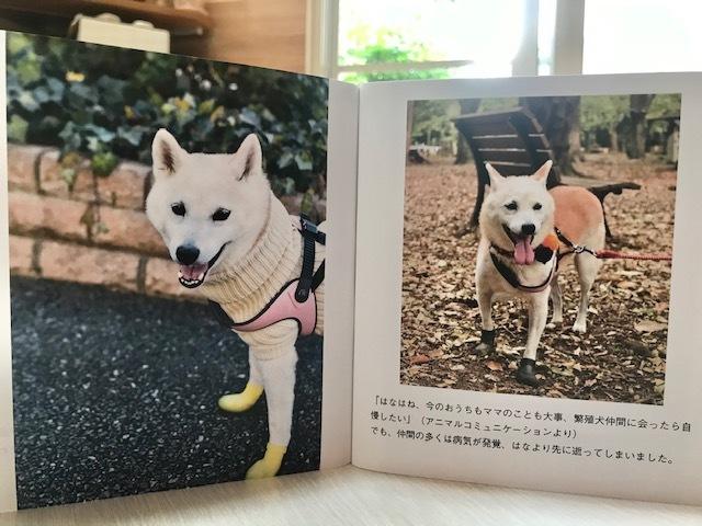 元繁殖犬「はなちゃん」のフォトブック_f0242002_21592152.jpg
