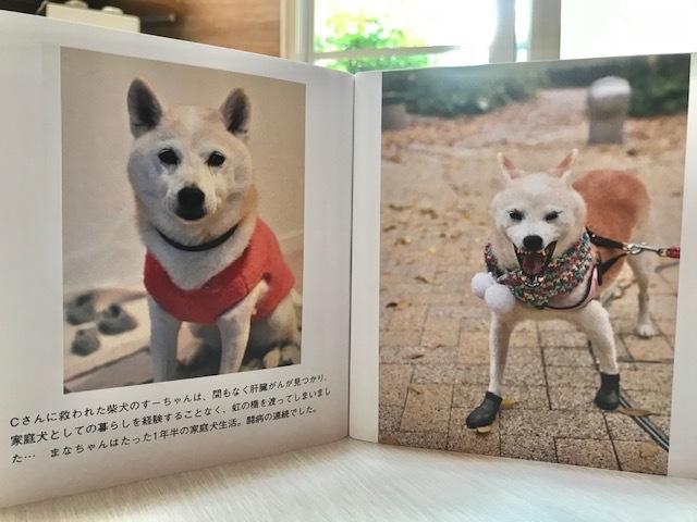 元繁殖犬「はなちゃん」のフォトブック_f0242002_21594177.jpg