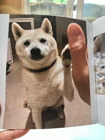 元繁殖犬「はなちゃん」のフォトブック_f0242002_21595040.jpg