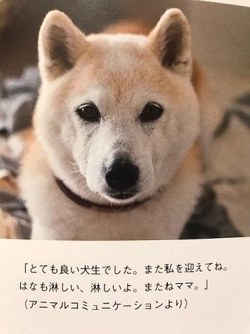 元繁殖犬「はなちゃん」のフォトブック_f0242002_22000956.jpg